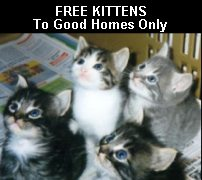 Free Pets To Good Homes