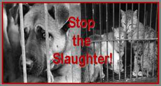 Stop the Slaughter of Cats & Dogs in Korea!