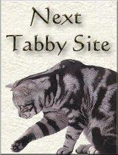 NextTabby Site
